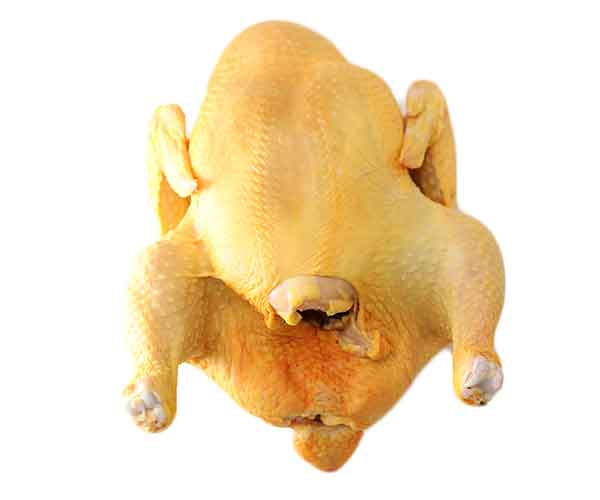 pollo-canal